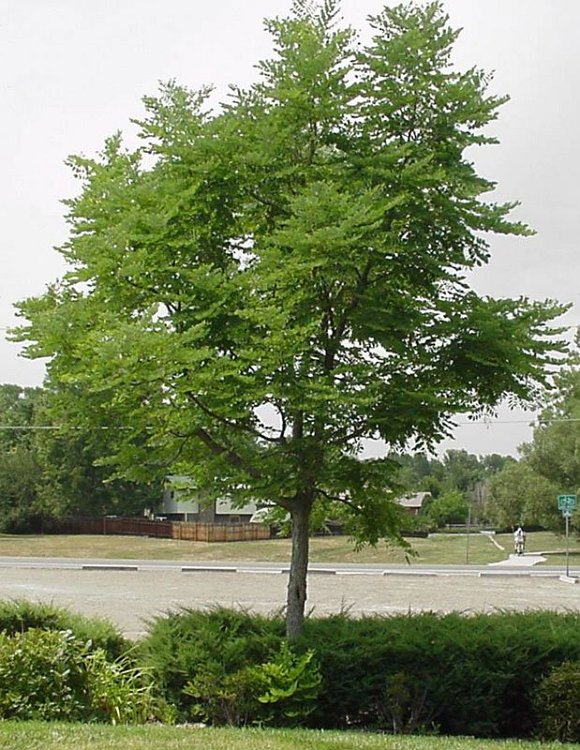 The White Family Bartley Wv additionally Single Stem Espresso Kentucky Coffee Tree besides August 4 2009 flash flood furthermore Hotel Review G34468 D618951 Reviews Navarre Beach C ground Navarre Florida additionally Letterhead. on magnolia ky